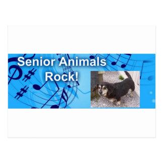 Senior Dogs Rock Postcard