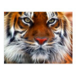 Señor de las selvas indias, el tigre de Bengala Postales