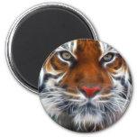Señor de las selvas indias, el tigre de Bengala re Imán Redondo 5 Cm