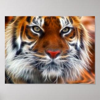 Señor de las selvas indias, el tigre de Bengala re Póster
