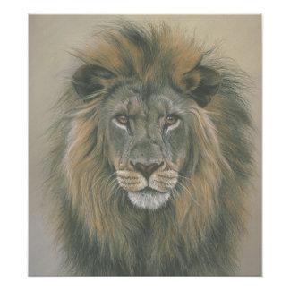 Señor del poster del león de la selva fotografias