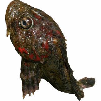 Señor irlandés Rock Fish Esculturas Fotográficas