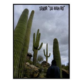 "Señor ""SA-WAH-RO"" Postcards"