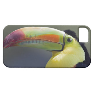 Senor Tuco iPhone 5 Case-Mate Case