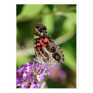 Señora americana Butterfly Tarjeta Postal