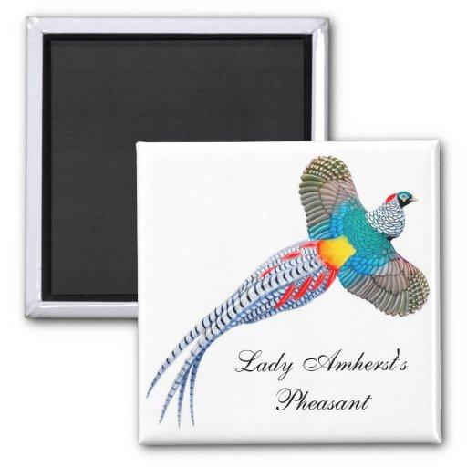 Señora Amherst Pheasant Square Magnet Imán Para Frigorífico