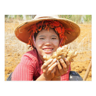 Señora birmana Picking Ginger Tarjetas Postales