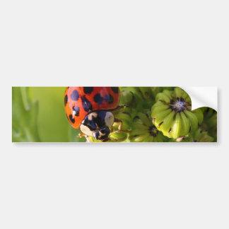 Señora Bug Beetle Harmonia Axyridis del Harlequin Pegatina Para Auto