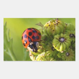 Señora Bug Beetle Harmonia Axyridis del Harlequin Rectangular Pegatinas