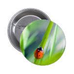 Señora Bug en la cuchilla de la hierba Pin