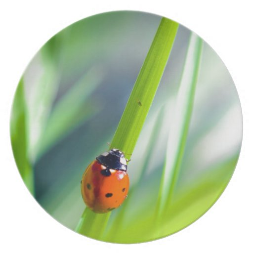 Señora Bug en la cuchilla de la hierba Plato Para Fiesta
