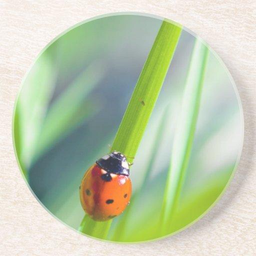 Señora Bug en la cuchilla de la hierba Posavasos Diseño