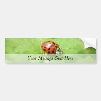 Señora Bug en la hoja de Feverfew Pegatina Para Auto