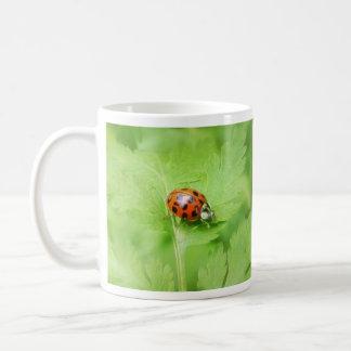 Señora Bug en la hoja de Feverfew Tazas De Café