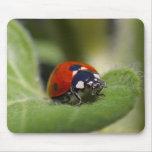 Señora Bug On A Leaf Alfombrillas De Ratón