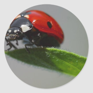 Señora Bug Perched en la hoja Pegatinas Redondas