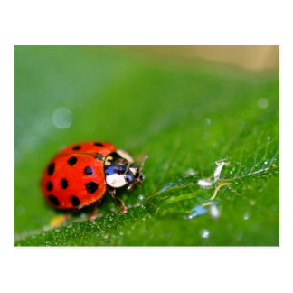 Señora Bug Tarjetas Postales