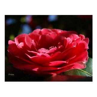 Señora Camellia Postal