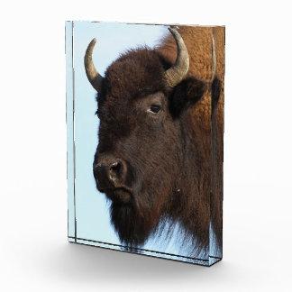 señora del bisonte