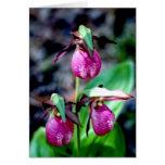 Señora deslizador I, placer verde rosado del jardí Tarjeta