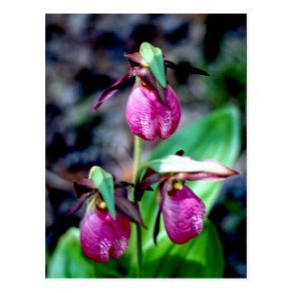 Señora deslizador I, placer verde rosado del Postal