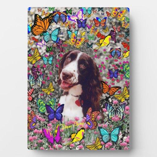 Señora en mariposas - perro del perro de aguas de  placas con foto