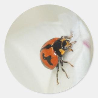 Señora escarabajo que sube arriba etiquetas redondas