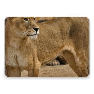 Señora Lioness