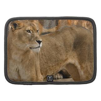 Señora Lioness Zip Folio Organizador
