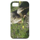 Señora Melanie Tweed iPhone 5 Case-Mate Protector