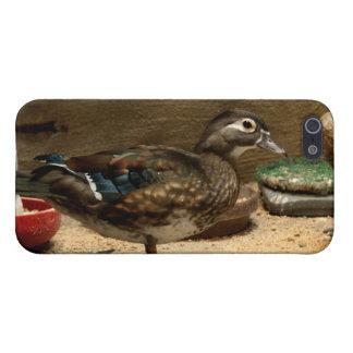 Señora pato de madera iPhone 5 carcasas