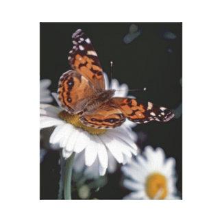 Señora pintada americano Butterfly On Daisy Canvas Impresión En Tela