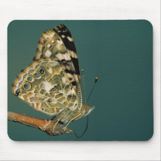Señora pintada Butterfly Close-up Alfombrilla De Ratones