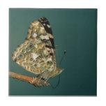 Señora pintada Butterfly Close-up Tejas Ceramicas