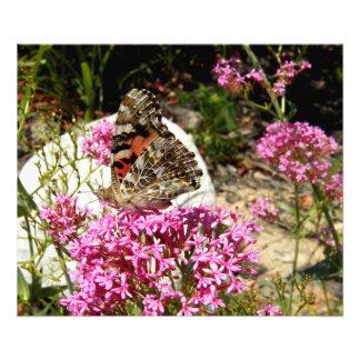 Señora pintada Butterfly Fotografías