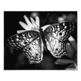 Señora pintada Butterfly - impresión de la foto Fotografías
