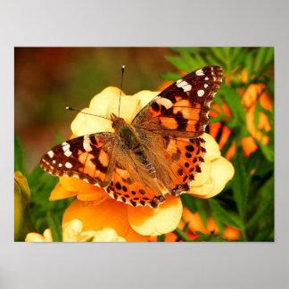 Señora pintada Butterfly Photo Poster
