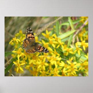 Señora pintada Butterfly Poster
