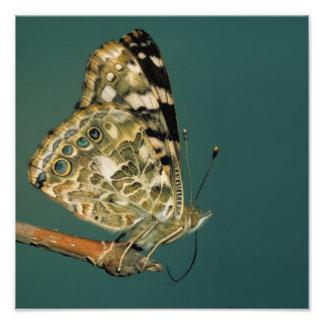 Señora pintada Butterfly Wings Fotografía