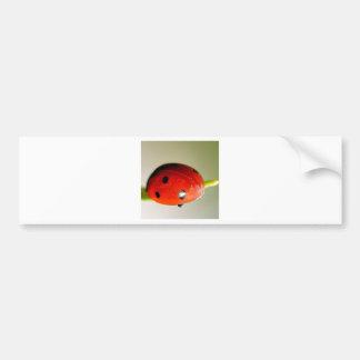 Señora roja Bird Gorgeous Pegatina Para Auto