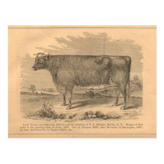 Señora Susan, vaca del primer premio en Utica, Postal