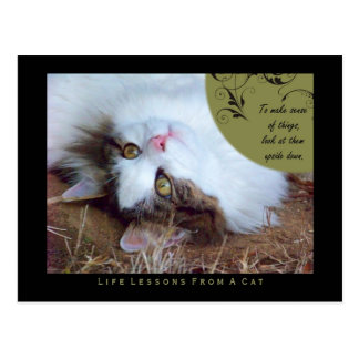 Sense Life Lessons From A Cat Postcard