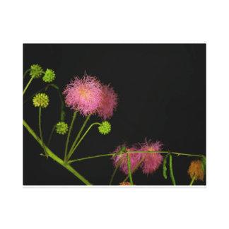 Sensitive Brier Canvas Print