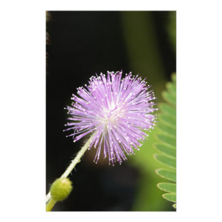 Sensitive plant (Mimosa pudica) Stationery