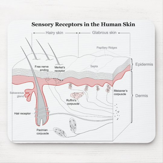 Sensory Receptors in the Human Skin Diagram Mouse Pad