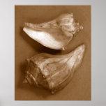 Sensual Shells Poster