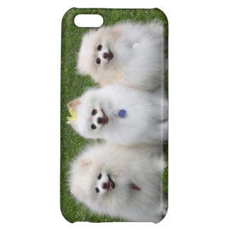 Sentada de 3 Pomeranians
