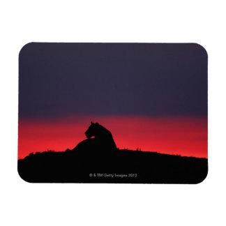 Sentada de la leona (Panthera leo), en la puesta d Iman Rectangular