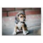 Sentada del beagle del bebé felicitaciones