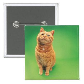 Sentada del gato del jengibre, mirando hacia pin cuadrado